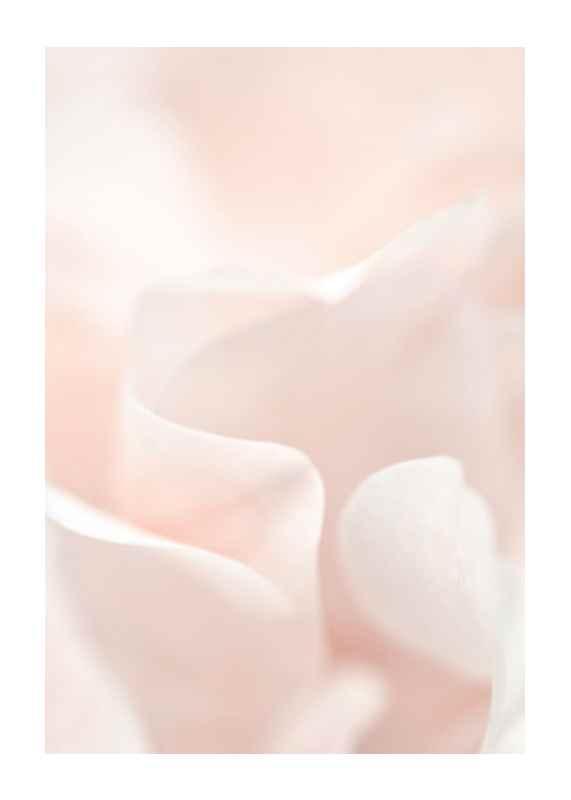 Tender Flowers No2-1