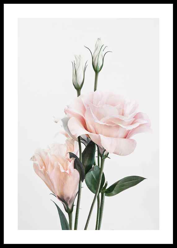 Rose Bouquet No1