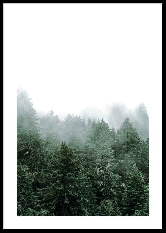 Misty Forest-0