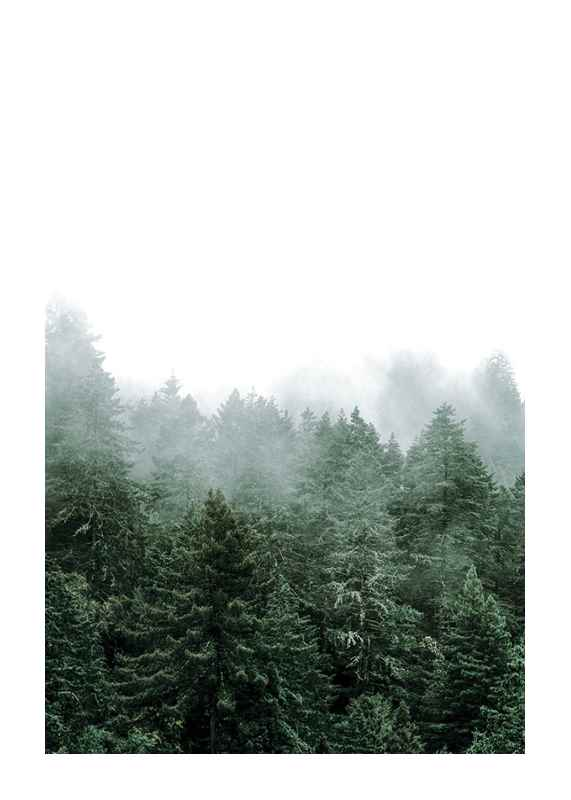 Misty Forest-1