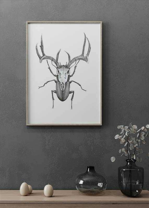 Mr stag beetle-2