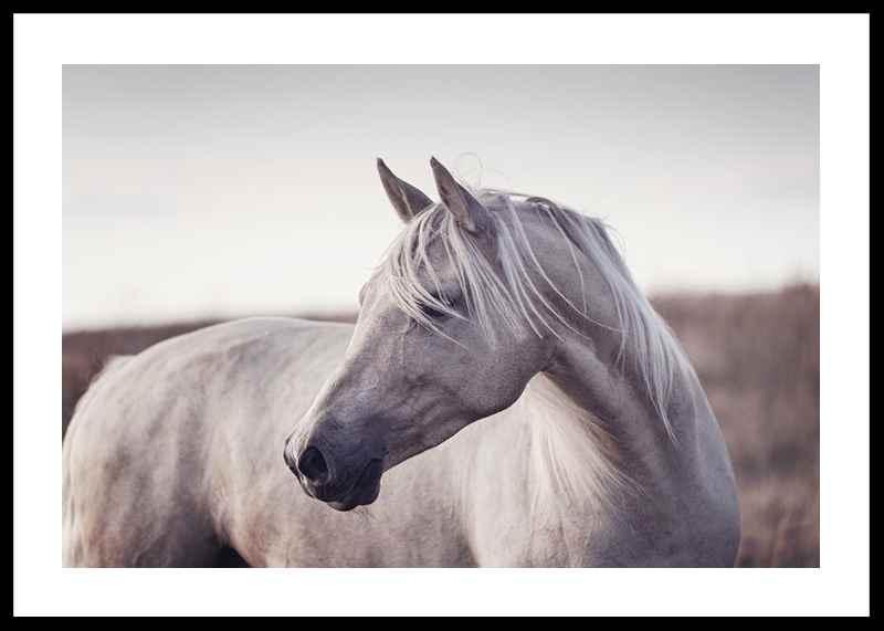 White Horse-0