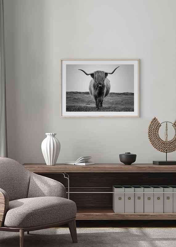 Highland Cattle B&W-4