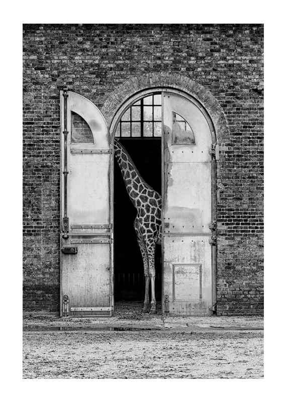 Hiding Giraffe-1