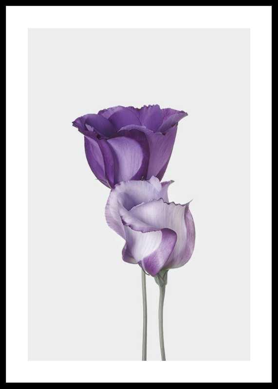 Eustoma Flowers-0