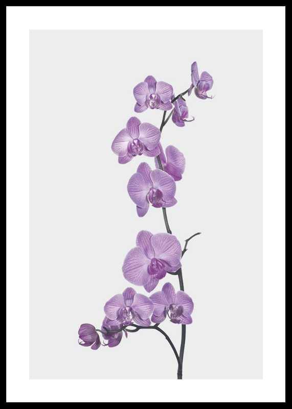 Orchids-0