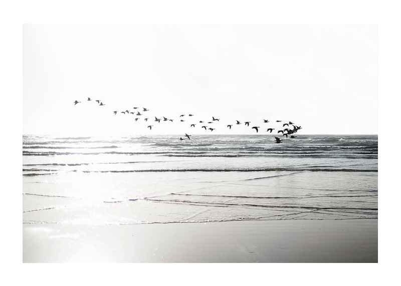 Birds Over Beach-1