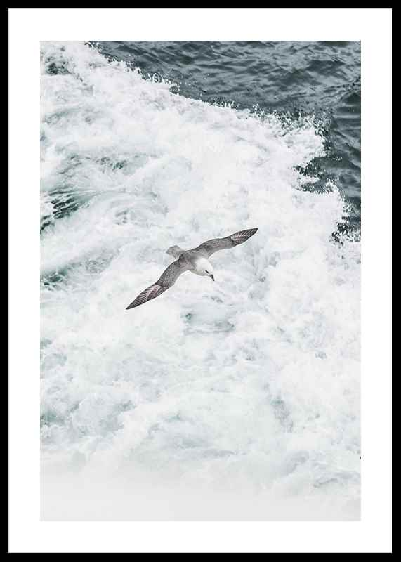 Grey Seagull-0