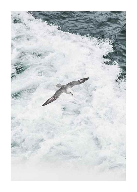 Grey Seagull-1