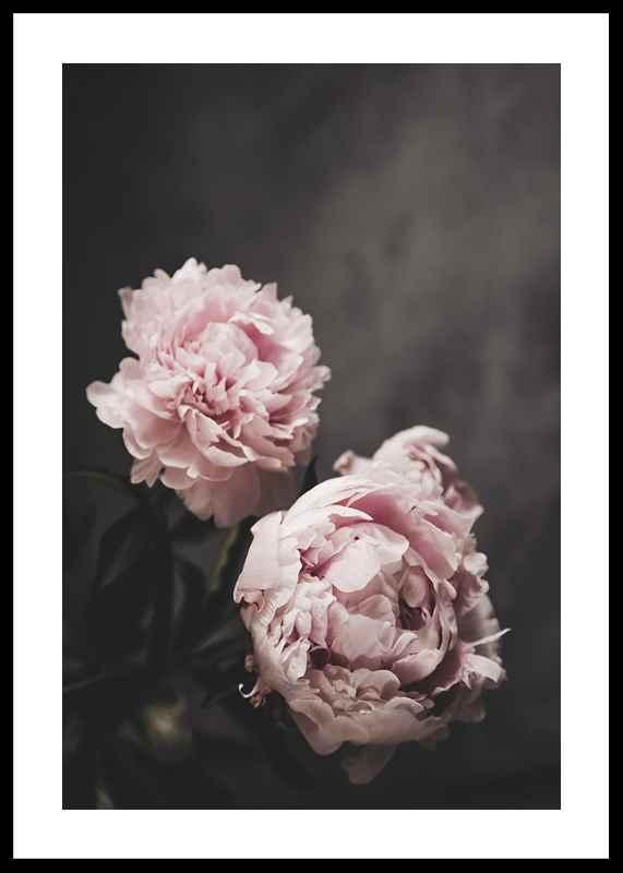 Pink peonies No2-0