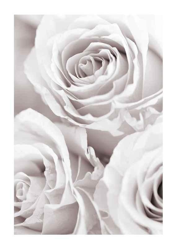 Bright Pink Roses No1-1