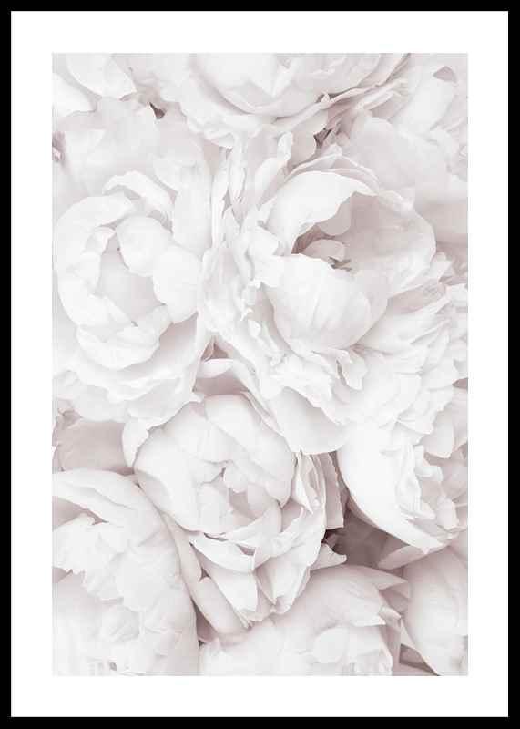 Bright Pink Roses No3