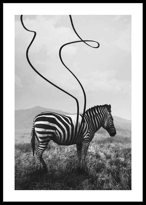 Abstract Zebra
