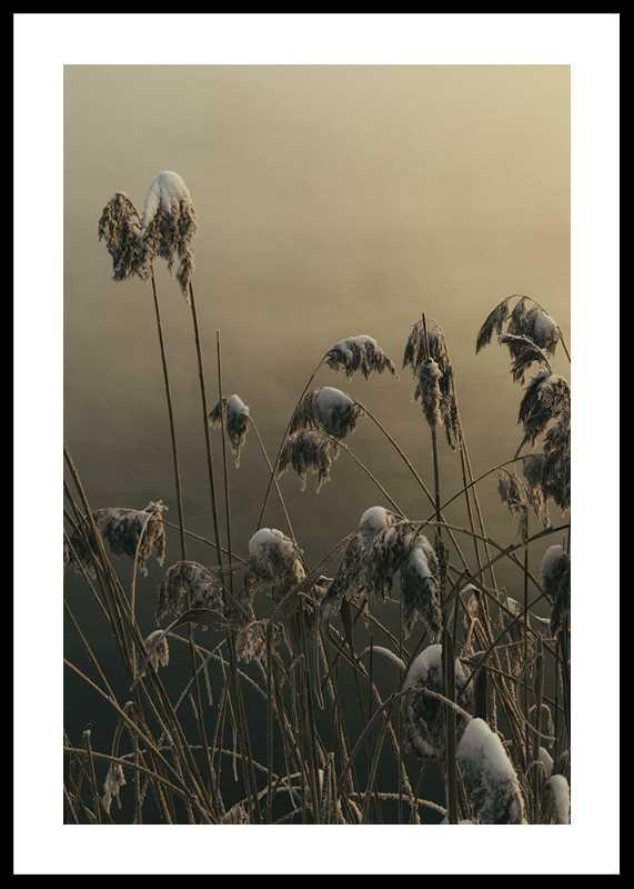Winter Reed No1-0