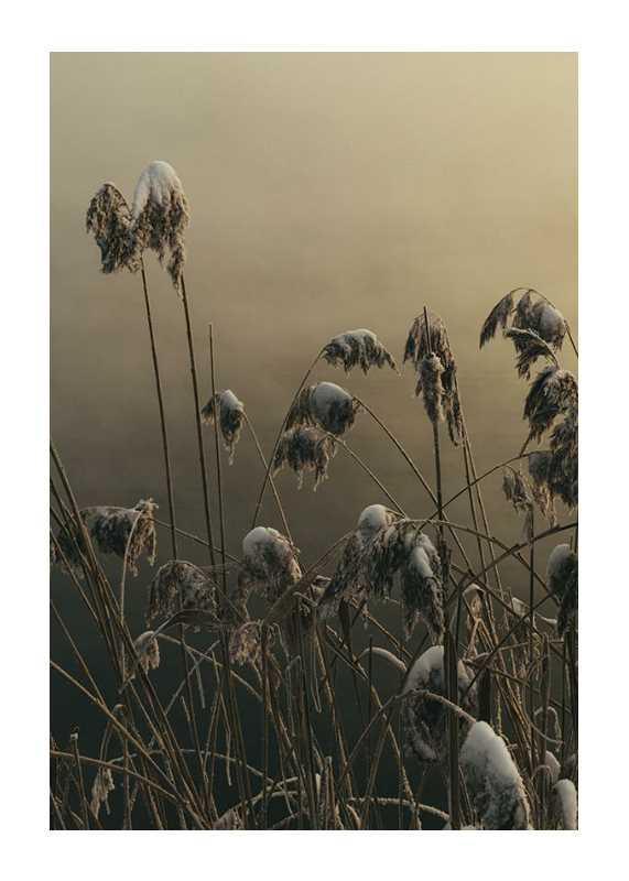 Winter Reed No1-1