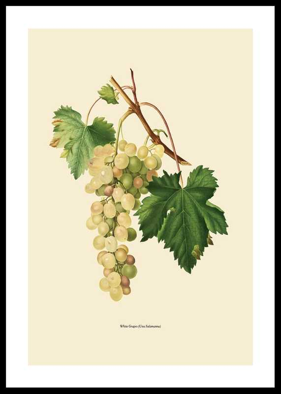 White Grapes-0