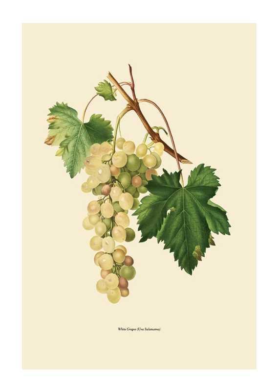 White Grapes-1