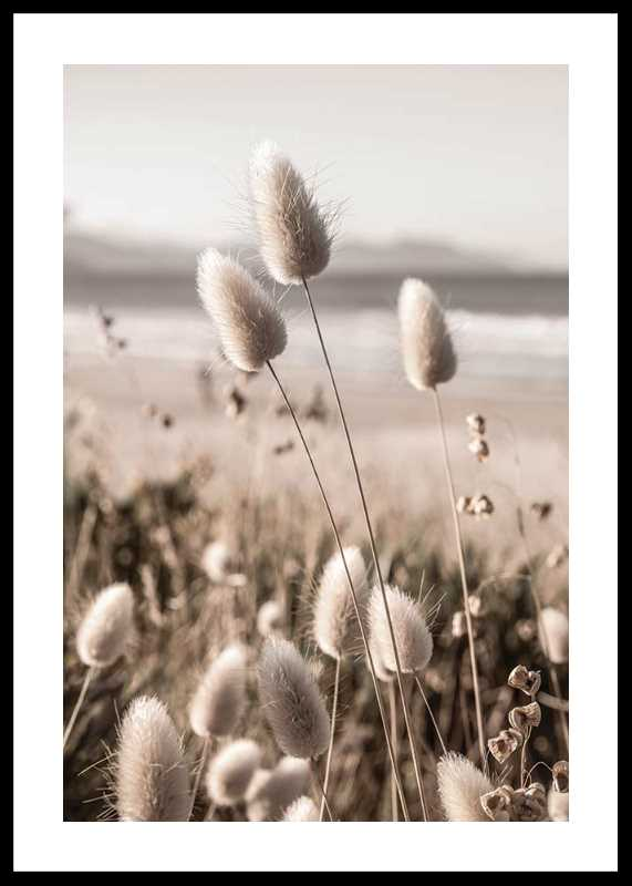 Soft Grass-0