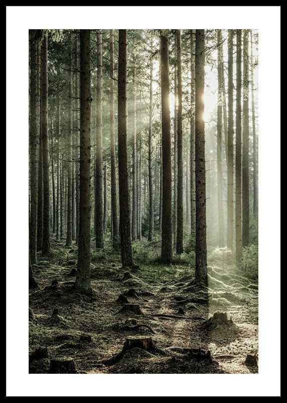 Sunbeam Forest