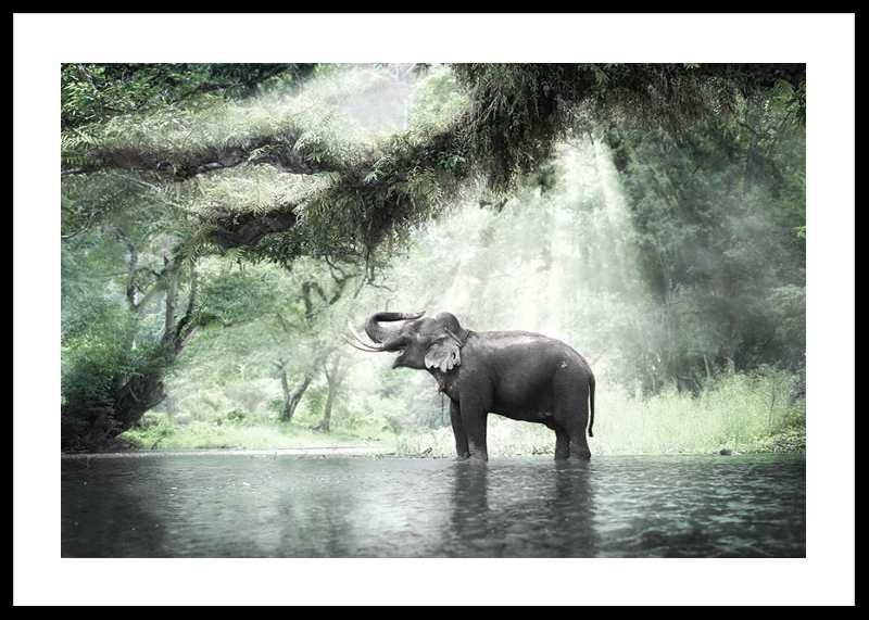 Elephant In Sunlight