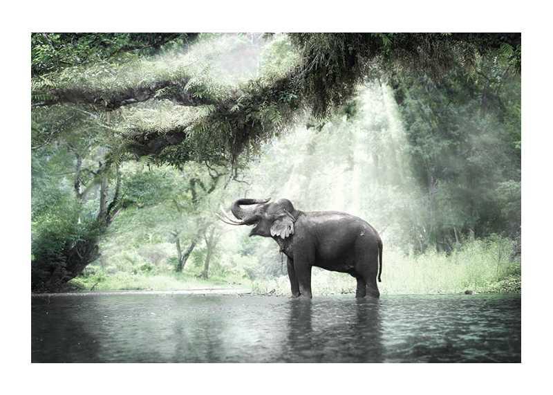 Elephant In Sunlight-1